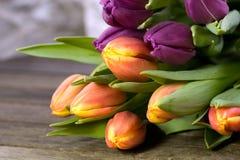 Orange and purple tulips royalty free stock photos