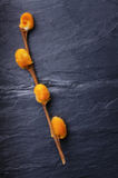 Orange pussy-willow on a vintage dark tile slate surface Stock Images