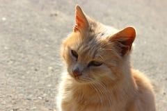 Orange pussycat. Orange cat staring at something in the street royalty free stock photography