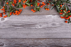 Orange Pyracantha berries on old wooden texture board Stock Photography