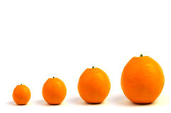 Orange quartet Royalty Free Stock Photography