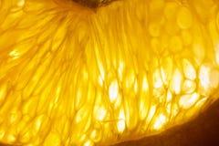 Orange rétro-éclairée Image libre de droits