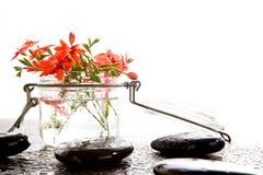 Orange röd freesia Laxa blommar i den glass behållaren med vattendren Arkivfoton