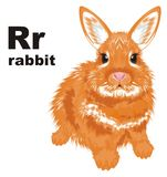 Rabbit and abc. Orange rabbit sit with his name and letters r vector illustration