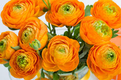 Orange ranunculus bouquet close up Stock Photo
