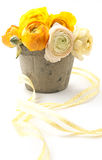 orange ranunculus Royalty Free Stock Photography