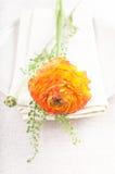 Orange ranunkulus flower Royalty Free Stock Photography
