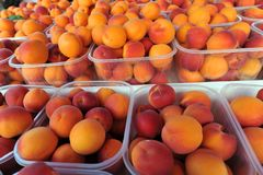 Orange and red apricots - market. Orange and red apricots in little plastic containers on the market stall close-up Stock Images
