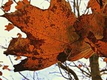 Orange, Red, Bright, Leaf Stock Images