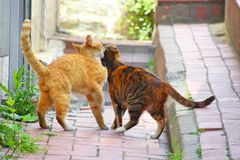 An orange and a red brown striped cat. Cuddle on the walkway with each other royalty free stock images