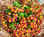 Orange red flower beds Stock Photography