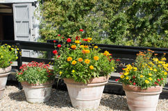 Orange and red flowers in terracotta pots Royalty Free Stock Photos