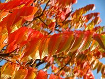 Orange, Red, Leaves, Leafy, Trees Stock Photos