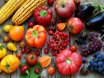 Orange, red, purple fruits and vegetables royalty free stock photos