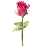 Orange red Rose. EPS 10 Stock Images