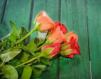 Orange and red roses flowers, green wood background Stock Photography