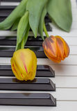 Orange and red tulip on a piano Royalty Free Stock Images