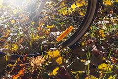 Orange reflectors on spokes of bicycle autumn day Royalty Free Stock Photos