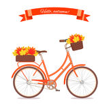Orange retro bicycle with autumn leaves in floral basket and box on trunk. Color bike isolated on white background. Flat vector illustration. Cycle with leaves Stock Photos