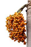 Orange ripe Betel nut palm fruit Stock Photo