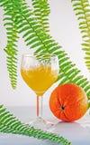 Orange Royalty Free Stock Photo