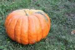 Orange ripe pumpkin on a grass Royalty Free Stock Photography