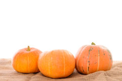 Orange ripe pumpkins Stock Photography