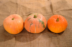 Orange ripe pumpkins Royalty Free Stock Photo