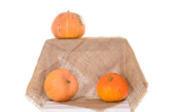 Orange ripe pumpkins Royalty Free Stock Photos