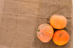 Orange ripe pumpkins Royalty Free Stock Photography