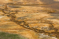 Orange rivulets in a hydrothermal area of Mammoth Hot Springs. Stock Photos