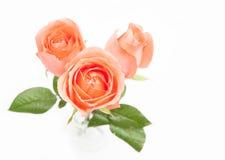 Orange ro Fotografering för Bildbyråer