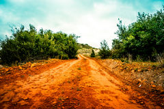 Orange road. Nature path surrounded by trees and bush Stock Photo