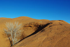 Orange rock hill with white dry tree Royalty Free Stock Image