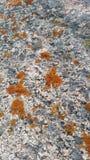 Orange Rock Lichen. Orange lichen on mountain granite royalty free stock photos