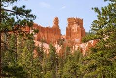 Orange rocks Bryce Canyon, Utah, USA. Orange rocks Bryce Canyon through the pine branches. Utah, USA royalty free stock photo