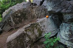 Orange on the rocks in the forest. Orange on the rocks in the forest at the foot of the rocks stock images