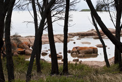 Orange rocks through trees, Freycinet Stock Image