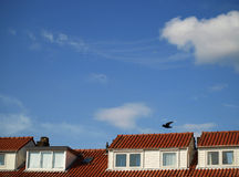 Orange rooftops. Typical Dutch houses with orange rooftops Stock Photos
