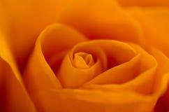 Orange rose. Soft macro shot of an orange rose stock image