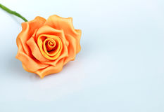 Orange Rose Stock Image