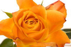 Orange rose abstract Stock Images
