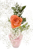 Orange Rose with Baby's Breath Royalty Free Stock Images