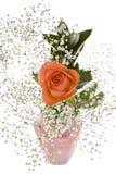 Orange Rose with Baby's Breath Stock Image