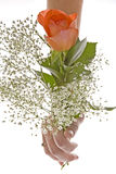 Orange Rose with Baby's Breath Royalty Free Stock Image