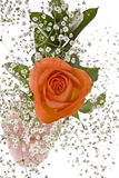 Orange Rose with Baby's Breath Royalty Free Stock Photo