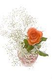 Orange Rose with Baby's Breath Stock Photos
