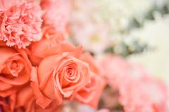 The orange rose for background. Royalty Free Stock Photography