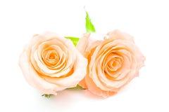 Orange rose. Beautiful orange rose flower, isolated on white background royalty free stock photos