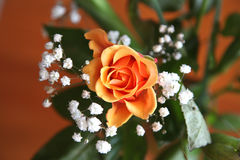 Orange Rose. Beautiful orange rose surrounded by green leaves and small white flowers with wooden background stock image